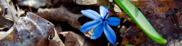 blue-flower.jpg